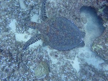 f:id:oceansguam:20170716142540j:plain