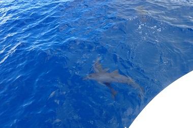 f:id:oceansguam:20170724151127j:plain