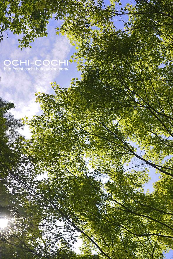 f:id:ochi_cochi:20190611130940j:plain