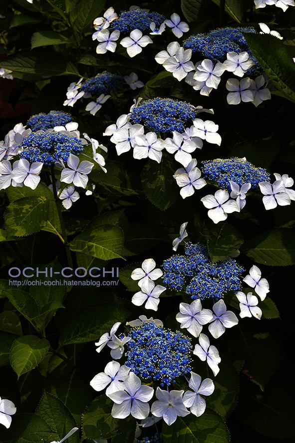f:id:ochi_cochi:20190625090451j:plain