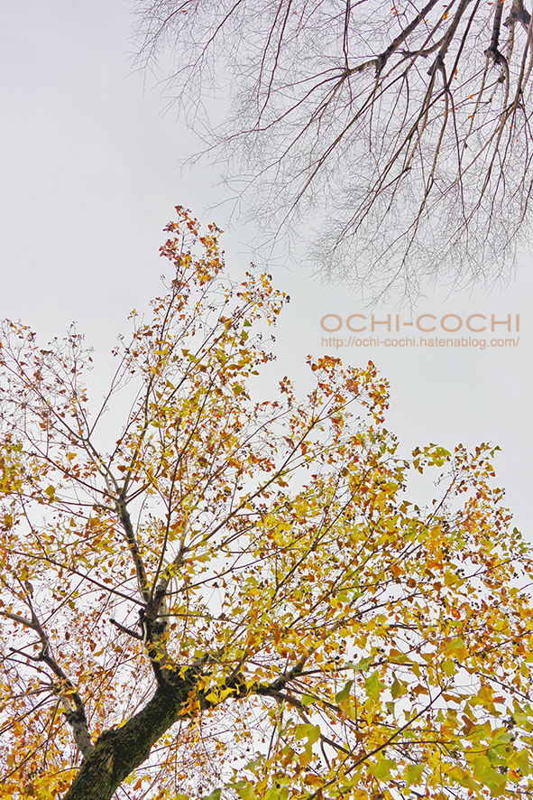 f:id:ochi_cochi:20191211094803j:plain