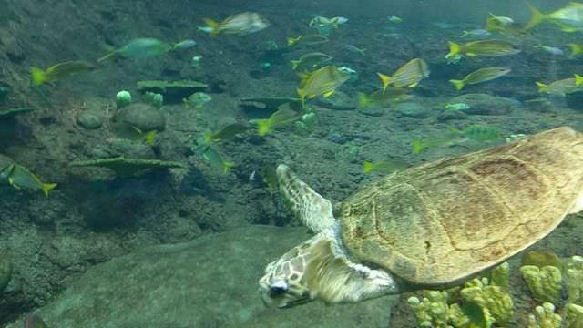 サンディエゴシーワールドウミガメ水族館