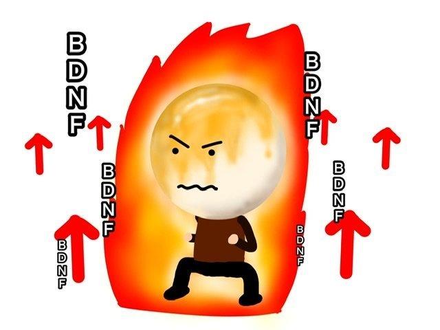 BDNFを上げるお団子団長