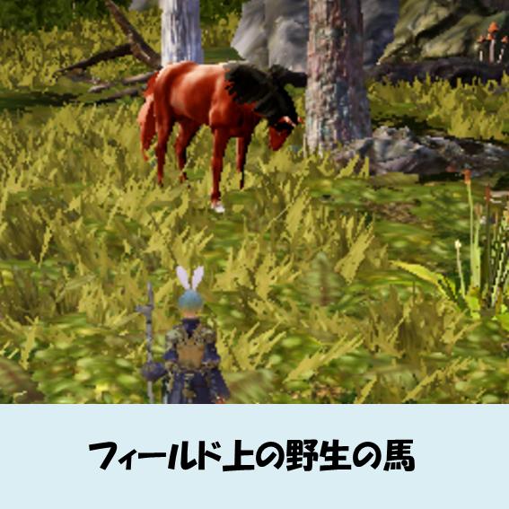 黒い砂漠MOBILE-野生の馬発見画面