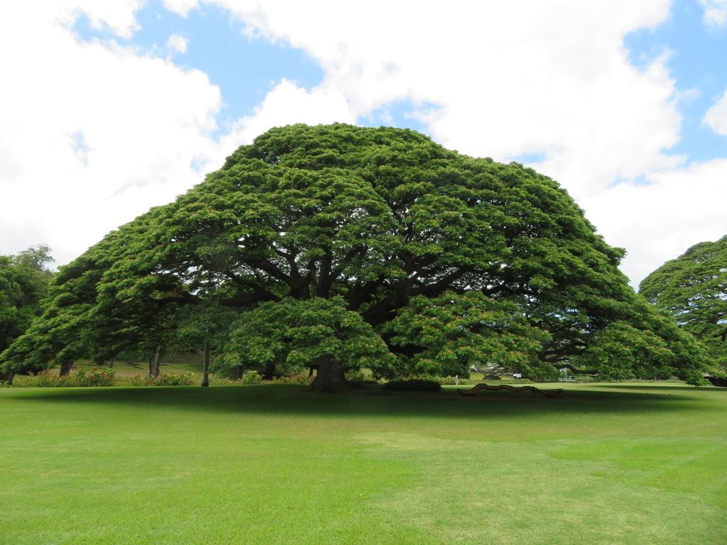 この木なんの木日立の木