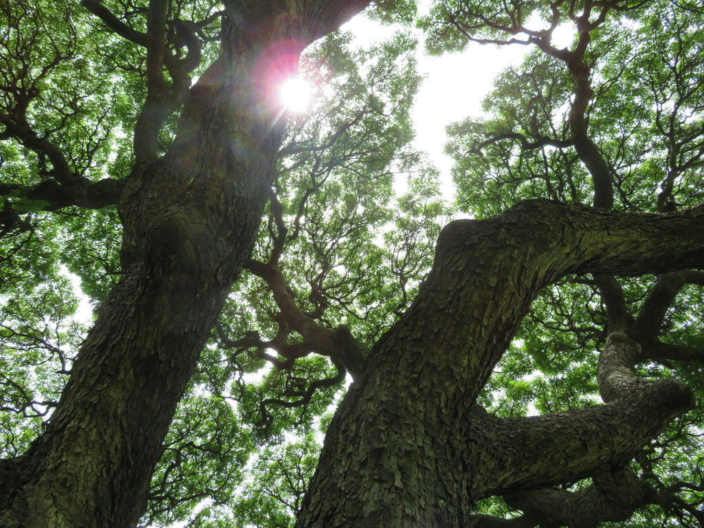 木の下から撮影