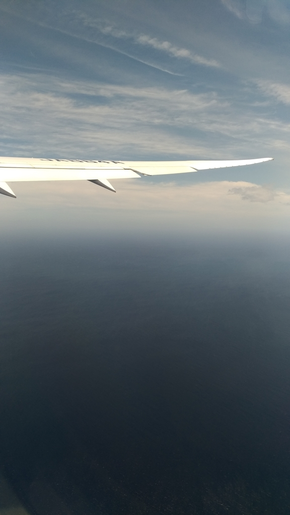 窓から見える翼