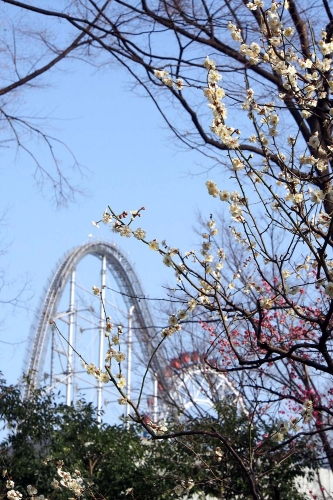 140226小石川後楽園2