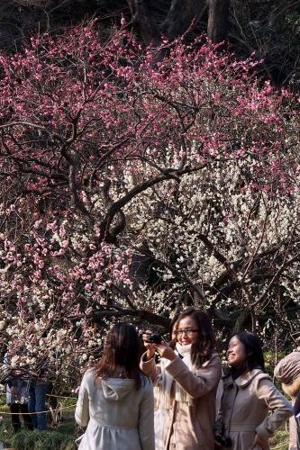 140226小石川後楽園5
