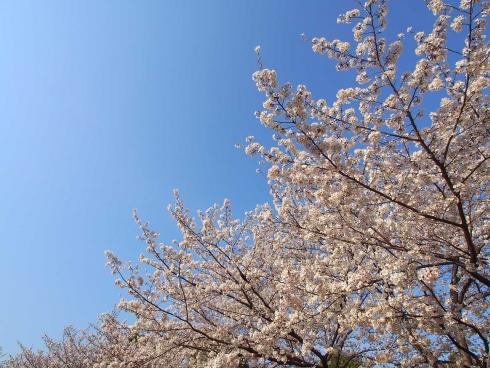140401入谷中央公園2