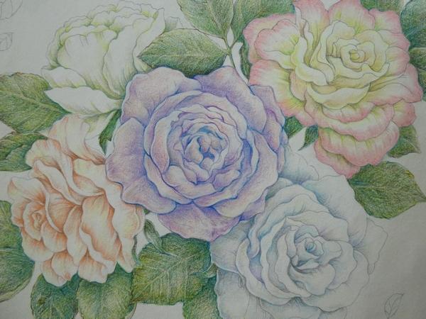 完成無印色鉛筆でバラの花を塗ってみました 花日和花だよりより 塗り絵