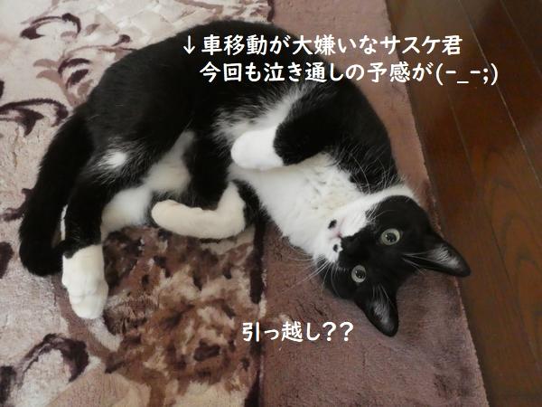 f:id:ofukusuke:20201214170242j:plain