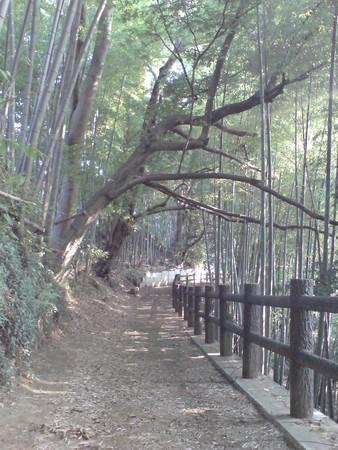 傾いだ木のある道