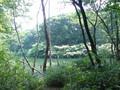 [公園]築池3