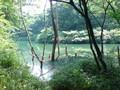 [公園]築池4
