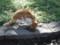 上野公園ネコ2