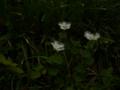 [神社][花]戸隠神社 奥社