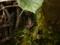 カエル - 白髭神社境内