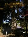 [神社][木]荒倉神社 - 長野市鬼無里新倉