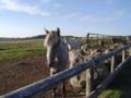 美ヶ原高原牧場 馬
