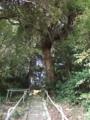 [神社]金刀比羅神社 - 印旛村瀬戸一本松