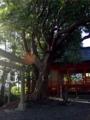 [神社][鳥居]玉前神社 - 長生郡一宮町