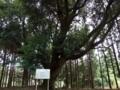 [神社][木]将門口ノ宮神社 - 佐倉市将門町