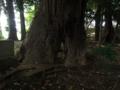 [神社][木]巌嶋神社 - 印西市船尾