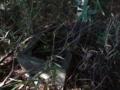 [神社][手水舎]水盤天神宮 - 八千代市桑橋