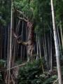 [神社][木]玉前神社 - 千葉県市原市高坂