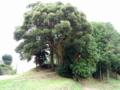[神社][木]八幡神社 - 千葉県市原市藪