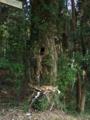 [木]白山神社 - 千葉県市原市飯給