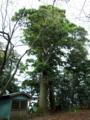 [神社][木]白鳥神社 - 千葉県市原市石塚