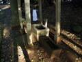 [神社][手水舎]鷲神社 - 千葉県佐倉市矢崎
