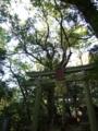 [神社][木][鳥居]菅原神社 - 千葉県八千代市下高野