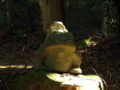 [神社]渡海神社 - 千葉県銚子市高神西町