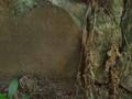 [神社][狛犬]渡海神社 - 千葉県銚子市高神西町