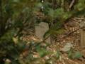 [神社]神明神社 - 千葉県八千代市真木野