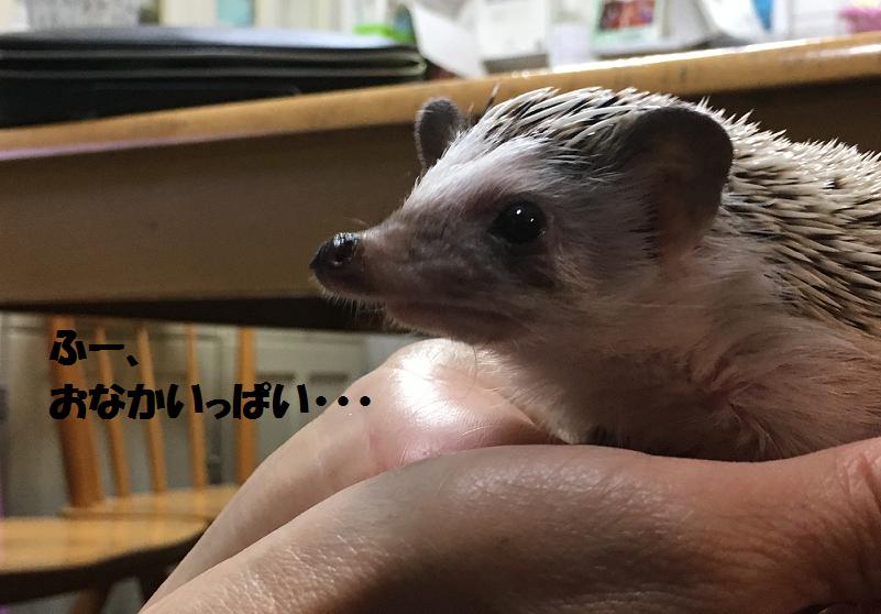 f:id:ogihara0308:20170511020912p:plain