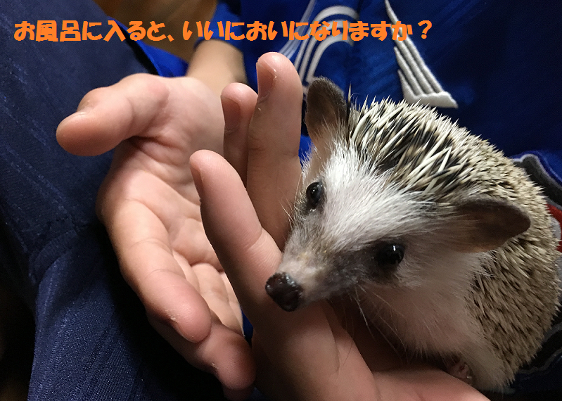 f:id:ogihara0308:20170530010444p:plain