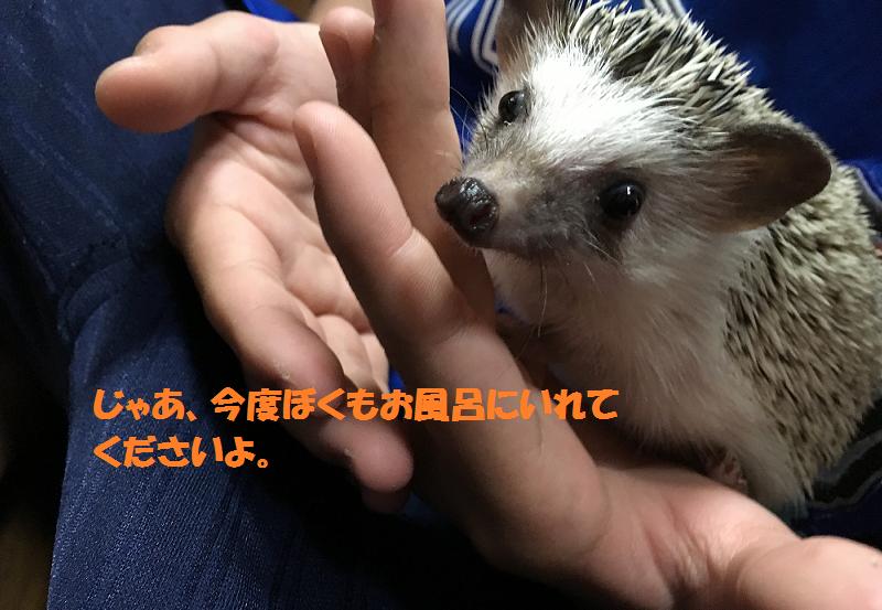 f:id:ogihara0308:20170530010554p:plain
