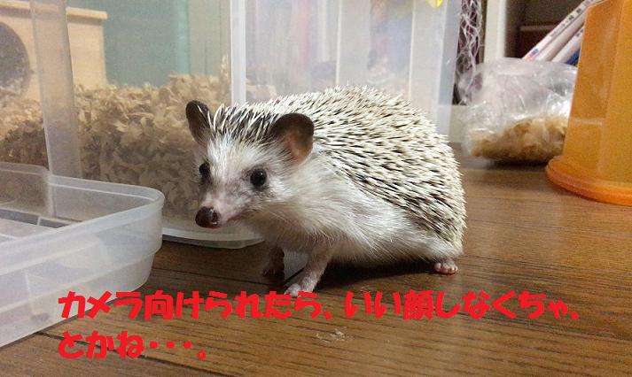 f:id:ogihara0308:20170604022836p:plain