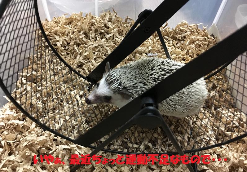 f:id:ogihara0308:20170608021822p:plain