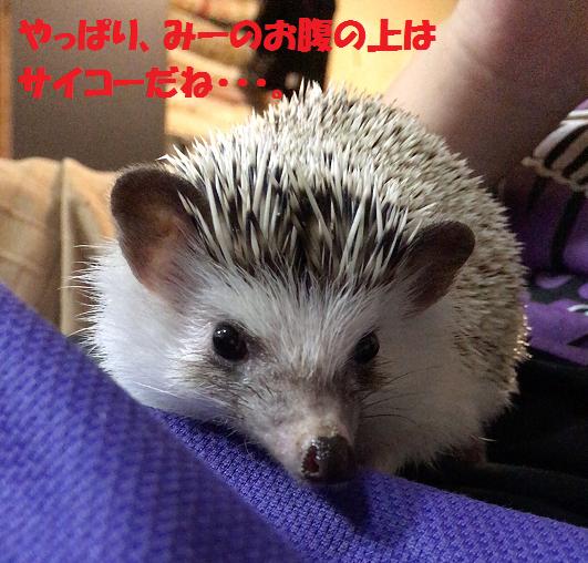 f:id:ogihara0308:20170611013956p:plain