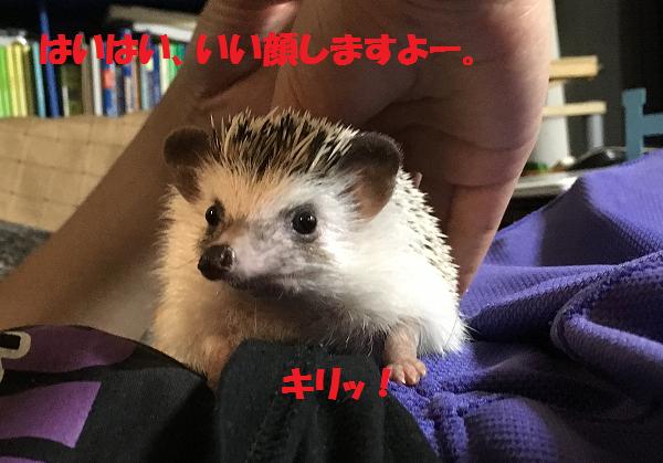 f:id:ogihara0308:20170611014136p:plain
