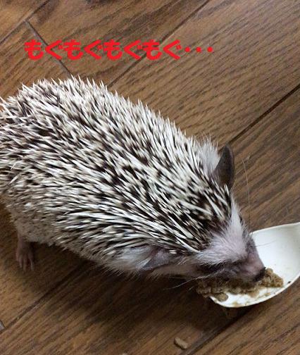 f:id:ogihara0308:20170617165508p:plain