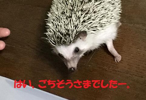 f:id:ogihara0308:20170617165631p:plain