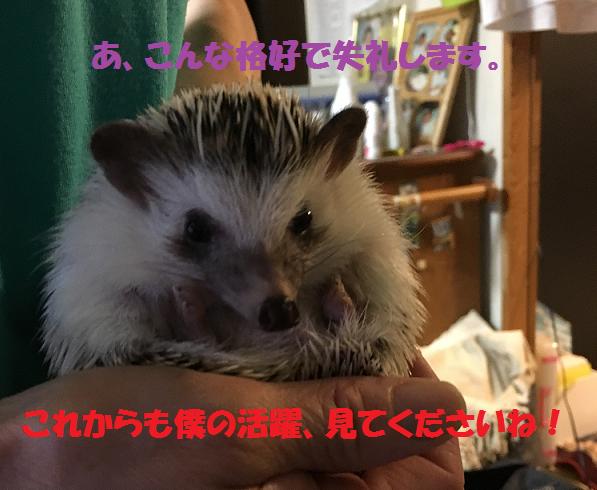 f:id:ogihara0308:20170620025835p:plain