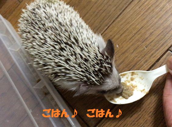 f:id:ogihara0308:20170623015200p:plain
