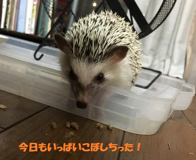 f:id:ogihara0308:20170623015249p:plain
